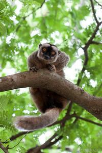 Sur un arbre perché